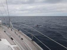 Die ersten Delfine haben wir noch fotografiert